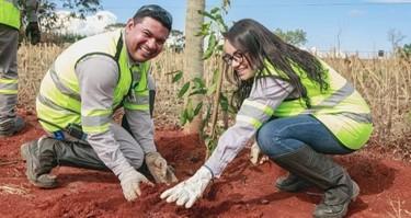CMOC Brasil promove plantio de mudas em Goiás